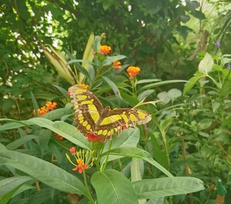 Butterfly in ZSL London zoo