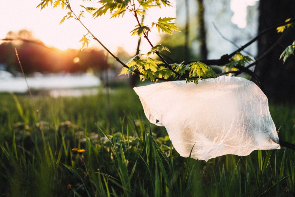 plastic stuck in a tree - alternatives to common plastic items