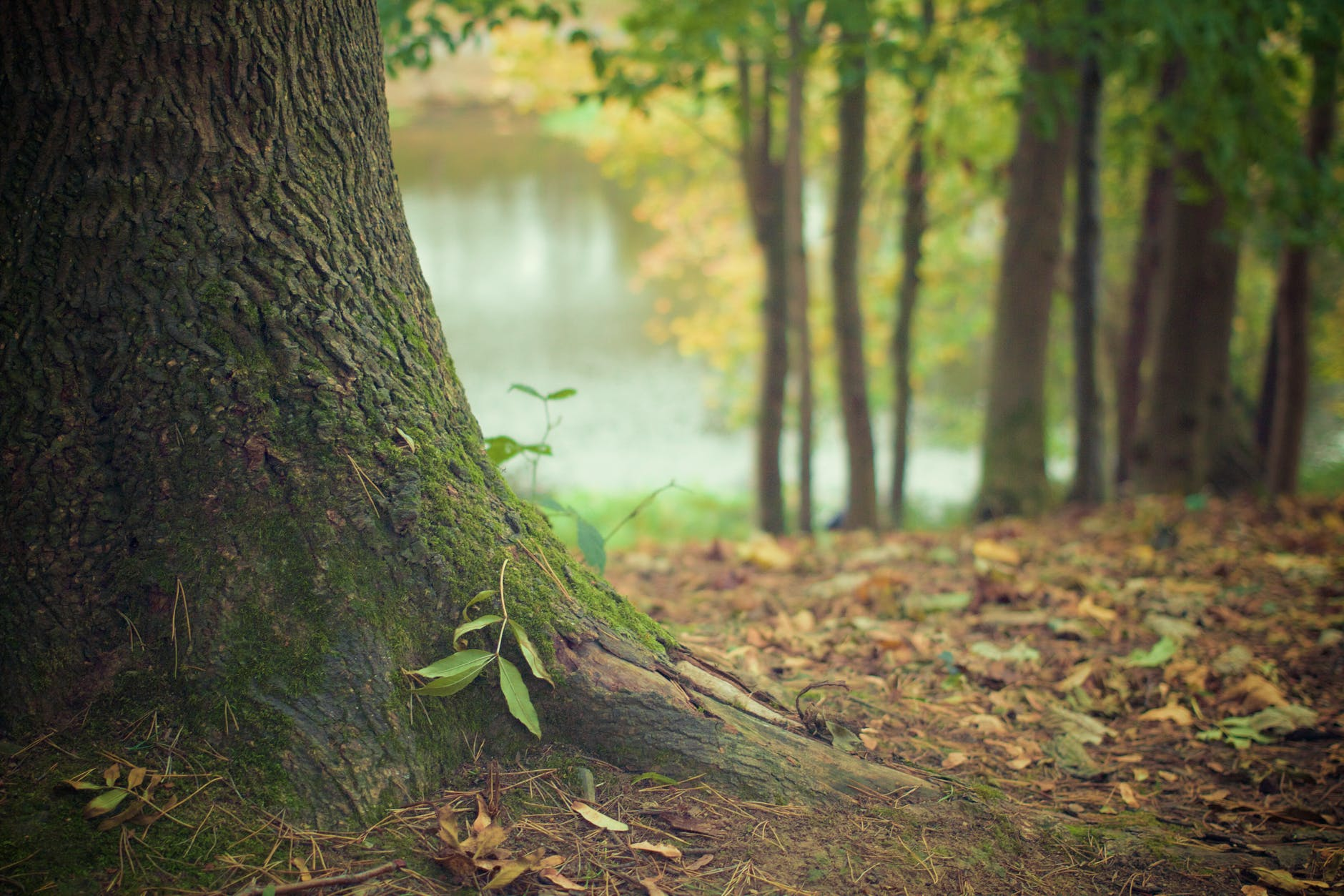 autumn fall forest leaves