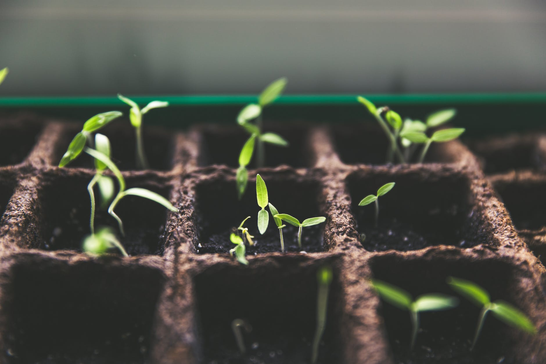 plants macro growth soil