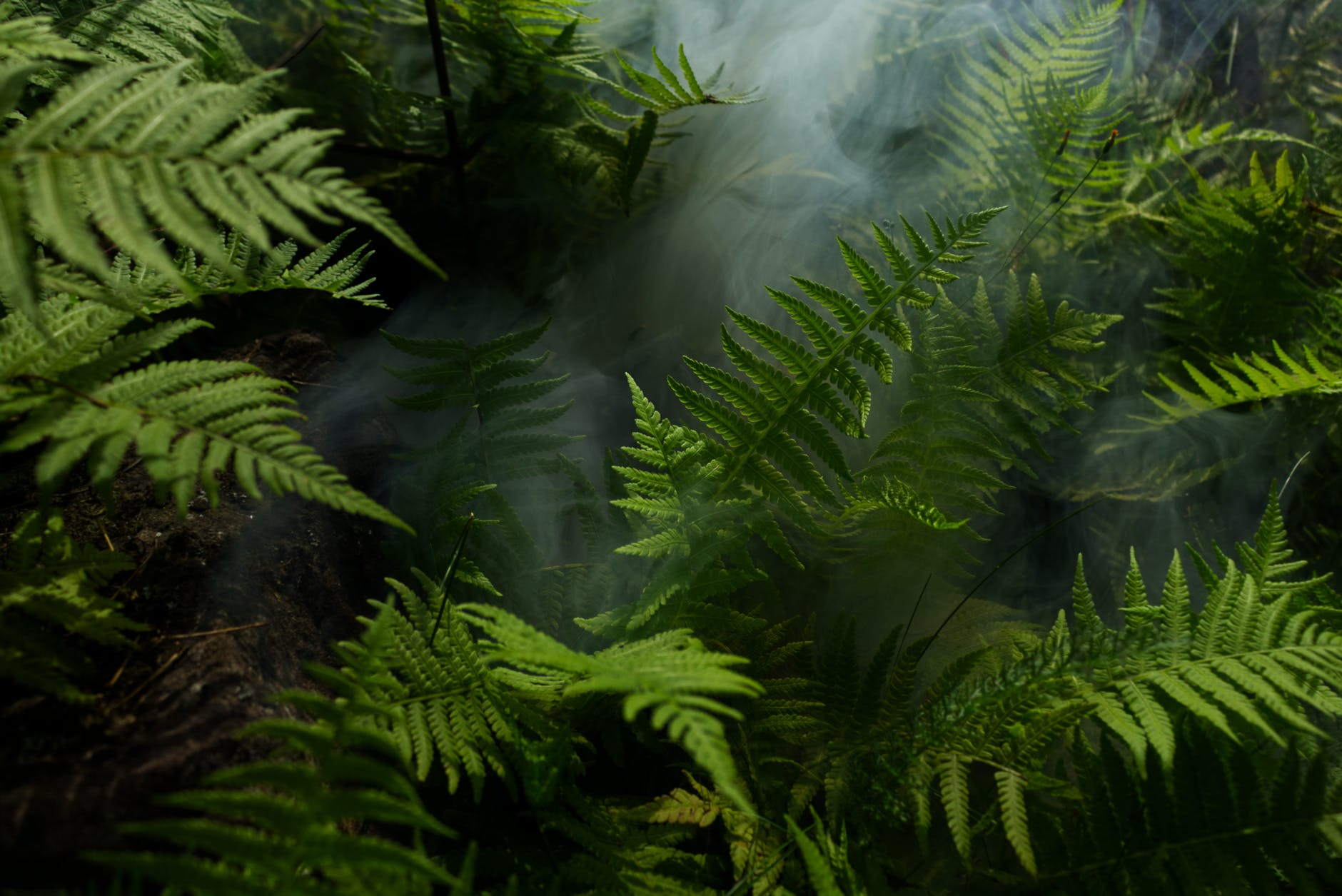 plants in the rainforest for climate change charities to donate to list
