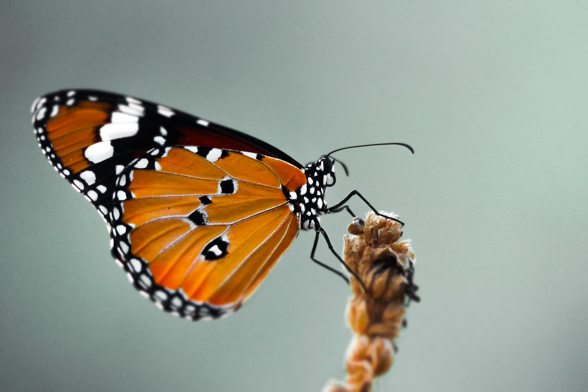 close up photo of butterfly