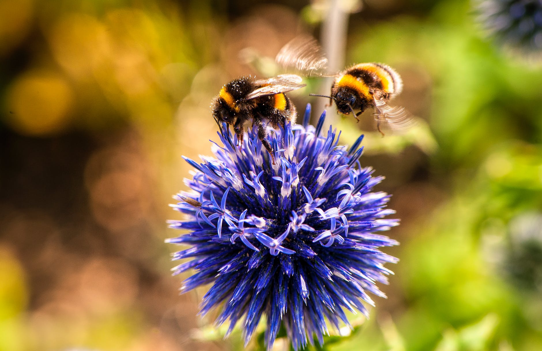 two bees on purple flower as part of list on the best climate change charities to donate to
