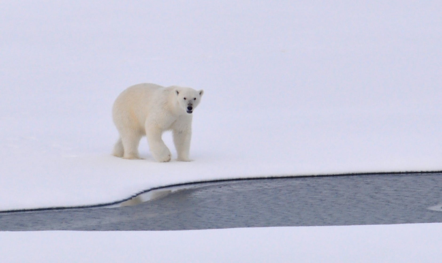 white polar bear on white snowy field near canal during daytime - for the best climate change charities  list